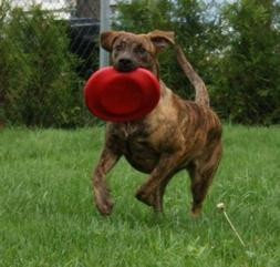 KONG Dog Flyer Frisbee Fetch Pet Toy Red/Black Extreme Large