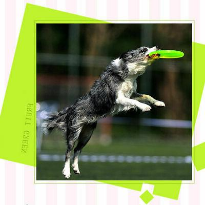 Dog Frisbee Pet Training Puppy Saucer Flying New