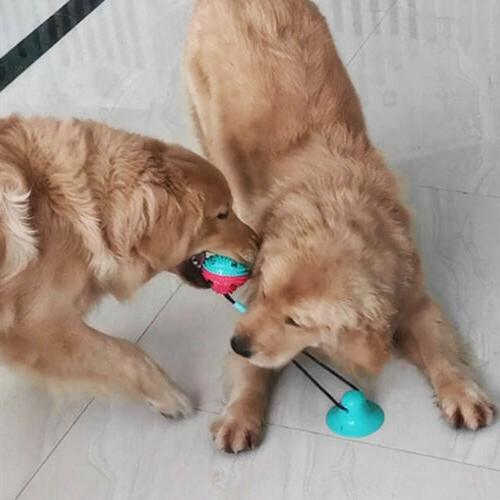 New Suction Puppy Cat Teeth Cleaning Chewing