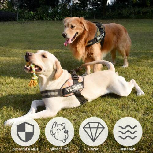 Dog Puppy Dogs - Set of 10