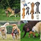Ohmygodd Plush Animal Dog Toy Set, Value Pack 5 Squirrel Squ