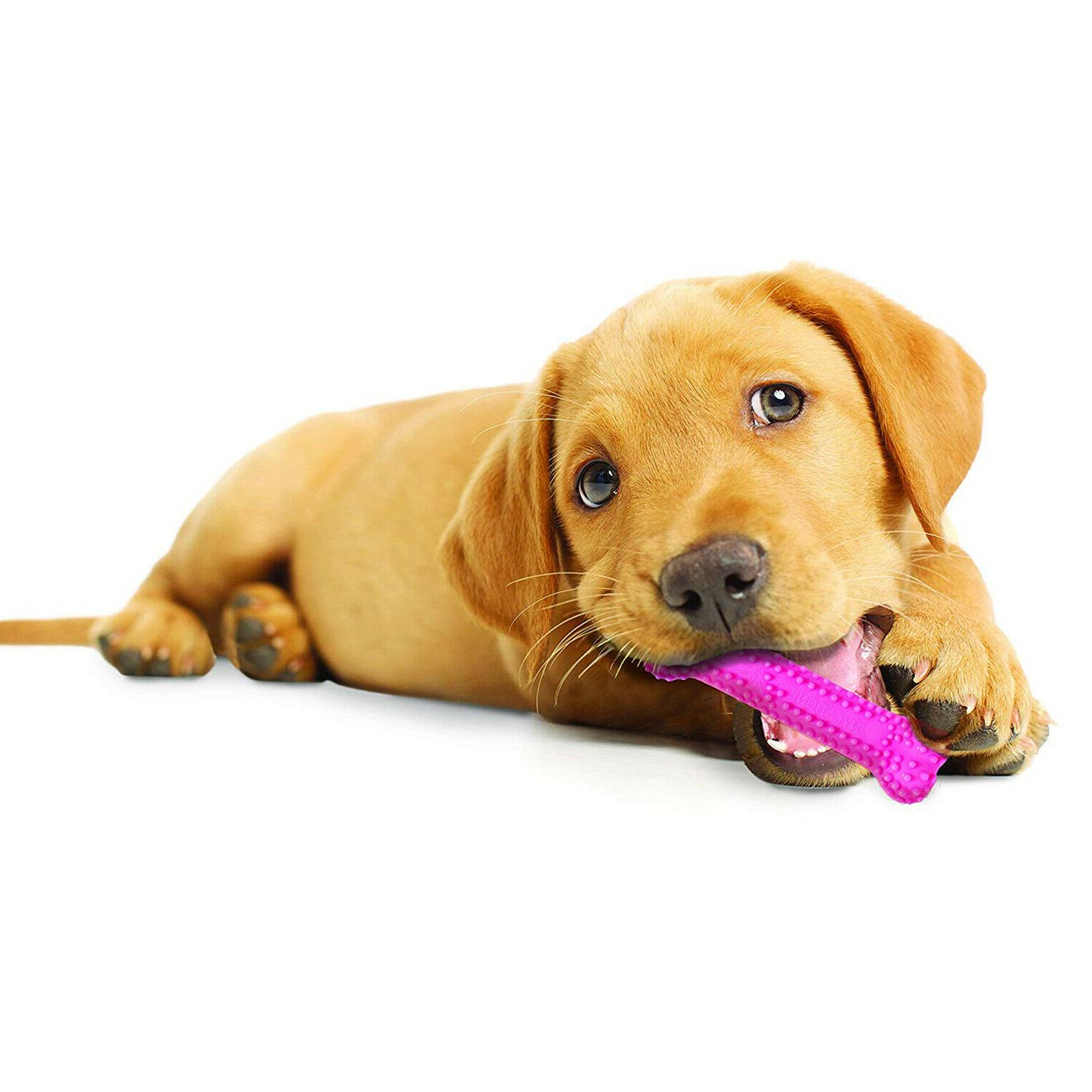 NYLABONE PUPPY Pets Dogs Petite Chewing