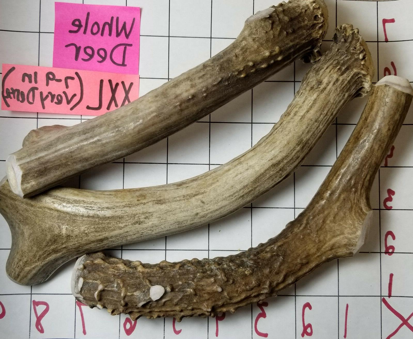 Whole MULE DEER ANTLER Small Large Treat XXL